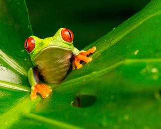 Frosch - Veränderungsmanagement