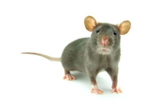 Als kleine Maus hinter die Kulissen blicken